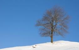 Albero del paesaggio di inverno con neve e cielo blu Fotografia Stock