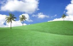 Albero del paesaggio sul campo verde con il cielo fotografia stock