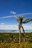 Albero del palme della noce di cocco Fotografia Stock Libera da Diritti