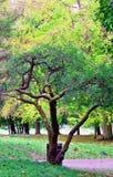 Albero del parco di Sefton Fotografie Stock Libere da Diritti