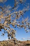 Albero del pattino del Nevada Immagini Stock