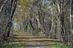 albero del percorso allineato 2 Immagini Stock