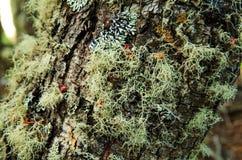 Albero del primo piano nella foresta di Tierra del Fuego Fotografie Stock