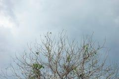 Albero del ramo con il cielo Fotografia Stock Libera da Diritti
