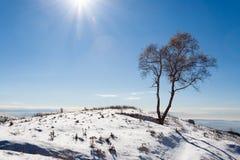 Albero del solitario con il sole Stagione di inverno Fotografia Stock Libera da Diritti