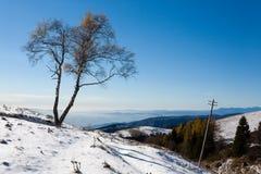 Albero del solitario con il sole Stagione di inverno Fotografia Stock