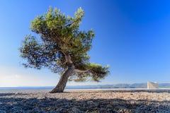 Albero del solitario sulla spiaggia Immagini Stock Libere da Diritti