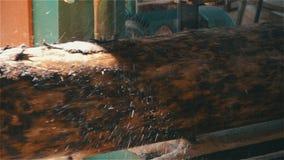 Albero del taglio della lama a nastro video d archivio
