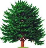 albero del yew. Vettore Fotografie Stock
