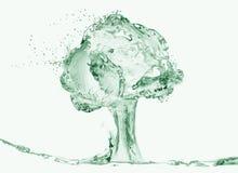 Albero dell'acqua Immagini Stock