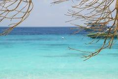 Albero dell'acqua e del ramo del turchese su una spiaggia in Tailandia Fotografie Stock
