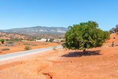 Albero dell'argania spinosa al sole, il Marocco immagini stock libere da diritti