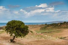 Albero dell'argania spinosa nel Marocco Immagini Stock Libere da Diritti
