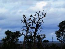 Albero dell'avvoltoio fotografia stock