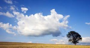 Albero dell'Hokkaido Fotografia Stock Libera da Diritti