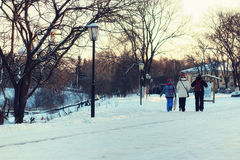 Albero dell'iluminazione pubblica di inverno Fotografia Stock Libera da Diritti
