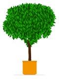 Albero dell'interno/esterno - Ficus in POT illustrazione di stock