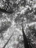 Albero dell'ombra Fotografie Stock Libere da Diritti