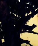 albero dell'ombra del gatto di giungla Fotografie Stock Libere da Diritti