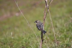 Albero dell'uccello Fotografia Stock