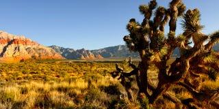 Albero dell'yucca del deserto Fotografia Stock Libera da Diritti