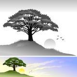 Albero della collina e paesaggio di Sun Fotografia Stock