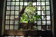 Albero della finestra Fotografie Stock