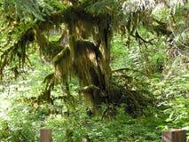 Albero della foresta pluviale Fotografie Stock