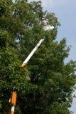 Albero della guarnizione del Arborist Fotografia Stock