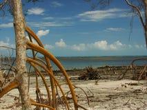 Albero della mangrovia immagini stock