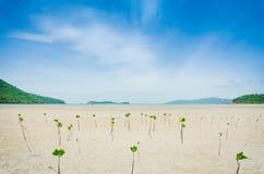 Albero della mangrovia Immagini Stock Libere da Diritti