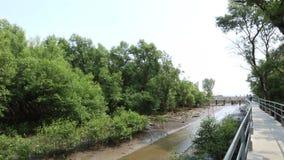 Albero della mangrovia sulla baia alla sera, Bangpu, Tailandia della costa archivi video
