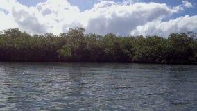 Albero della mangrovia in un mare stock footage