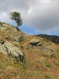 Albero della montagna Immagini Stock
