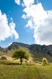 Albero della montagna Immagini Stock Libere da Diritti