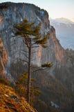 Albero della montagna alla luce di tramonto Fotografia Stock Libera da Diritti