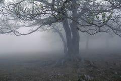 Albero della nebbia Fotografia Stock Libera da Diritti
