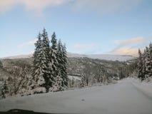 Albero della neve fotografia stock