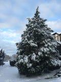 Albero della neve di Natale Immagine Stock Libera da Diritti