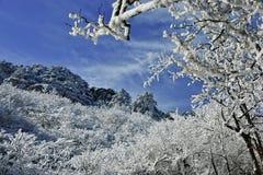 Albero della neve su cielo blu Fotografia Stock Libera da Diritti