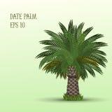 Albero della palma da datteri Immagini Stock