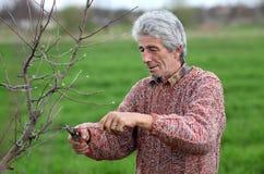 Albero della potatura del lavoratore in frutteto, agricoltura Fotografie Stock