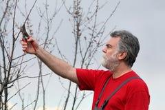 Albero della potatura dell'uomo in frutteto Fotografia Stock Libera da Diritti