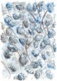 Albero della primavera con i fiori Fotografia Stock Libera da Diritti