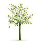 Albero della primavera con le foglie ed i fiori Fotografie Stock Libere da Diritti