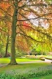Albero della primavera in giardino Fotografia Stock