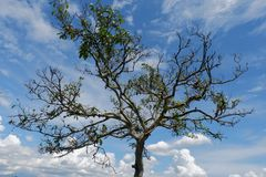 Albero della radice strutturato con cielo blu immagini stock libere da diritti