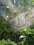 Albero della ragnatela Immagini Stock
