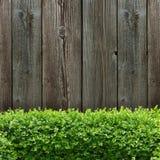 Albero della scatola e del bordo di legno Fotografia Stock Libera da Diritti
