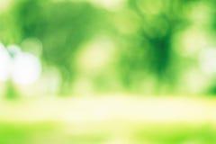 Albero della sfuocatura di verde di Bokeh Fotografie Stock